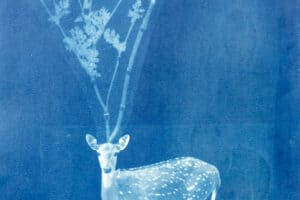 Shada Safadi, Untitled (2020), cyanotype print, 36 x 27 cm