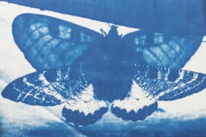 Shada Safadi, Untitled (2020), cyanotype print, 16 x 28 cm
