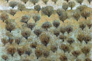 Nabil Anani, Olive Groves #2, 2019, mixed media on canvas, 100 × 112 cm